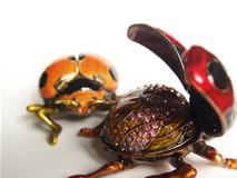 BJB05-bug-main